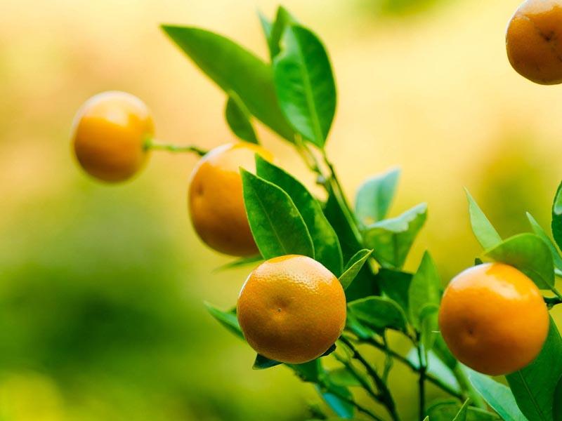 Alimentos-temporada-noviembre-Mandarina